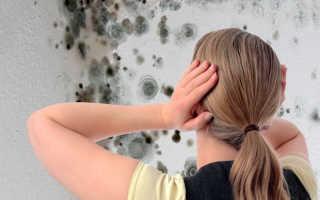 Как убрать плесень со стен в квартире, чтобы навсегда избавиться от грибка в доме